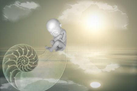 child, birth, shell